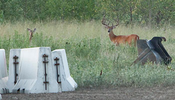 Deer Management Program
