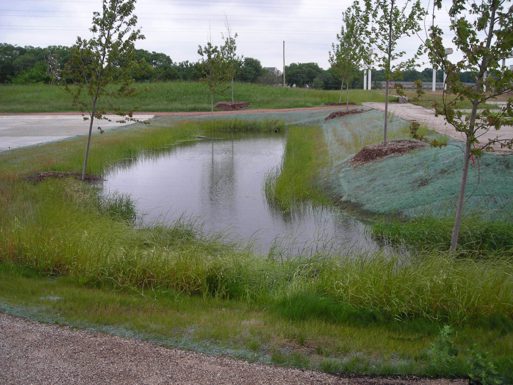 Water runoff and grass at Sylvan Slough Naturalized Park